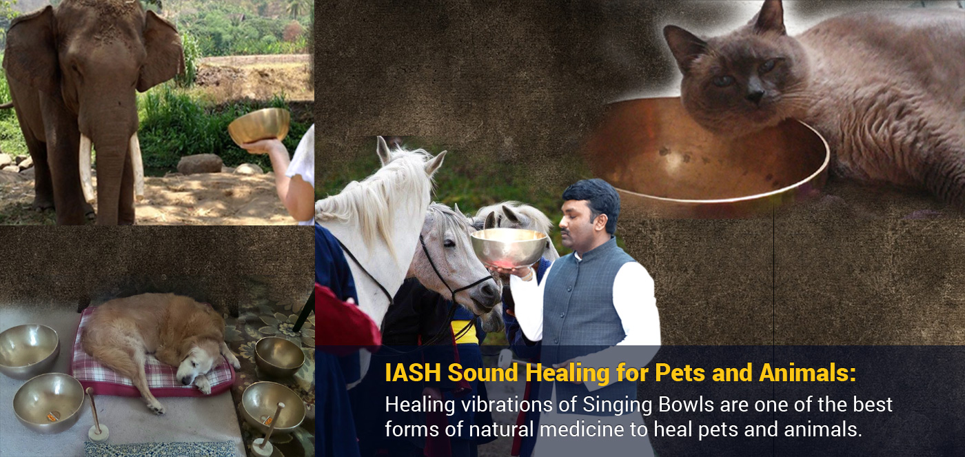 Welcome to International Academy of Sound Healing – World's best